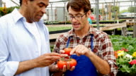 Confident nursery manager helps customer with tomato choice
