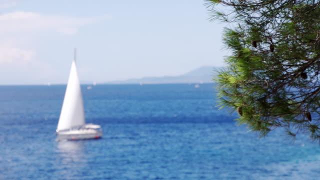 R/F Conifer Tree Against Sailboat