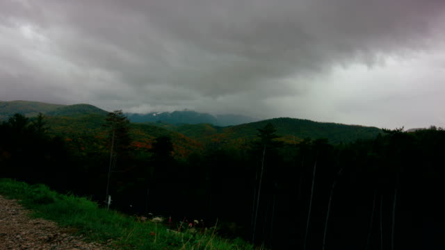 Coniferous forest on hills under dramatic grey sky