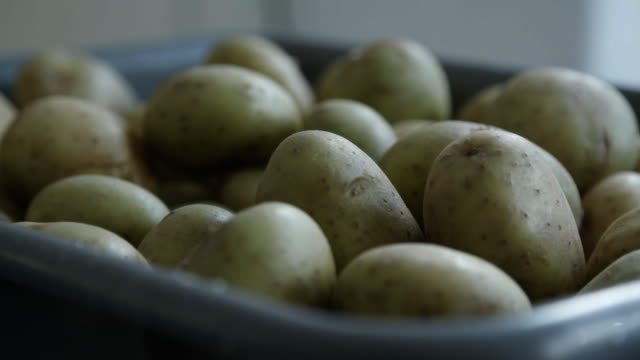 Container of potatoes