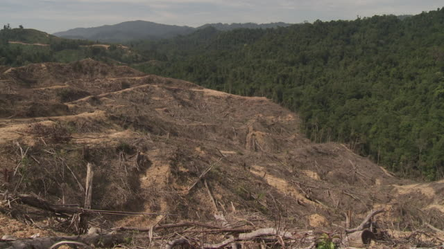 Contrasting line between natural rainforest and deforested area