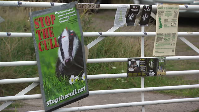 A controversial cull of badgers has begun in a bid to tackle the spread of bovine tuberculosis Farmers have welcomed the move to protect their...