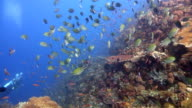 Coral garden 5