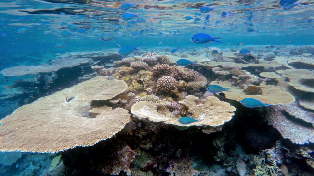Coral Garden On Maldives Stock Footage Video Getty Images