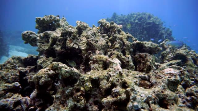 Coral Reef bleken beschadigd op kwetsbare ecosysteem Oceaan milieu