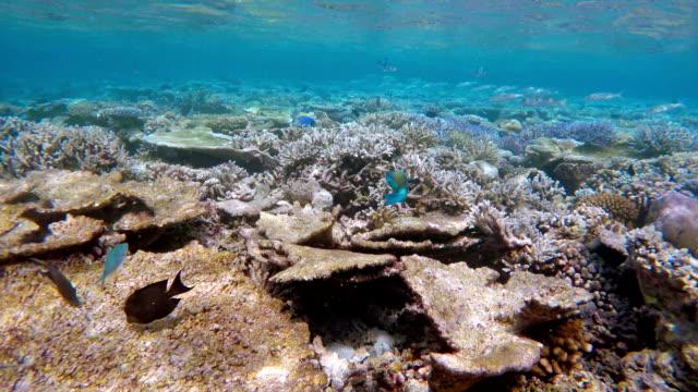 Coral reef garden on Maldives