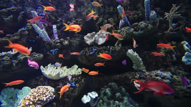 Coral Reef - HD Video