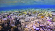 Coral reef in shallow water with lot of fisch on Red Sea
