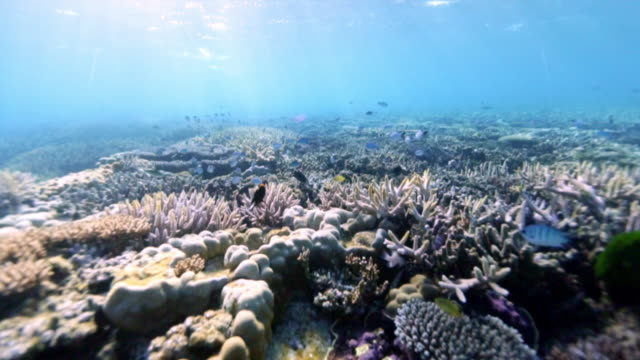 A coral reef in sunlight, Great Barrier Reef