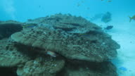 W/S UW coral reef life and recreational divers