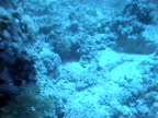 UNDERWATER WS Coral Reef moving through water down to MS Crocodile Fish camouflaged on sea floor
