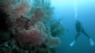 Coral reef of Raja Ampat, Indonesia