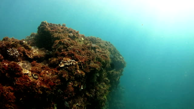 Coral reef of sub-tropical ocean