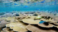 Coral reef on Maldives - South Ari Atoll