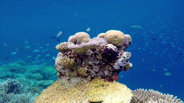 Coral reef on Maldives