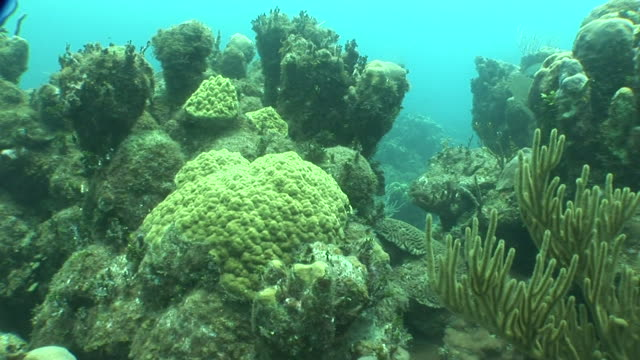 Coral reef w/ black fish swimming passing finger coral moving to edge of reef divided reef trenches below Ecosystem threatened Global Warming...