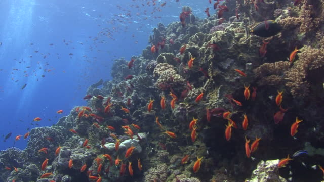 Coral Reef Wall