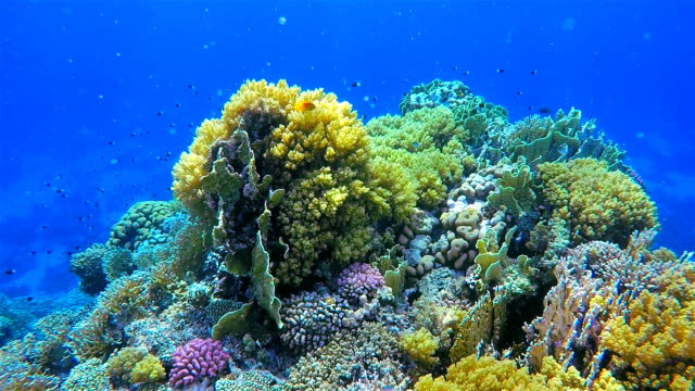 Coral reef with on Red Sea / Egypt / Marsa Alam