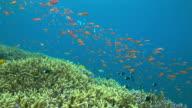 Coral sea 2
