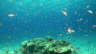 Coral Sea 6