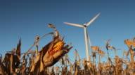 Bereit für die Ernte von Mais Geschäftsschluss mit Windkraftanlage im Hintergrund