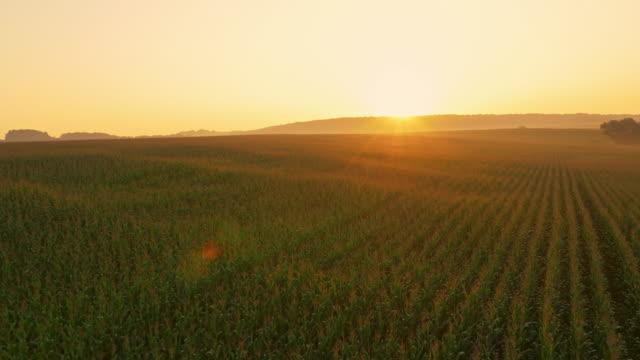 AERIAL sädesfält på sunrise