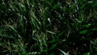 Corn Field in Sommer Luftaufnahme der Überführung von