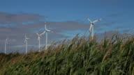 HD Cornfield in Front of a Wind Farm