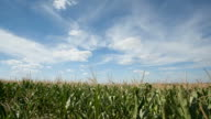 cornfield with clouds, time lapse