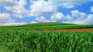 Cornfields and Hill
