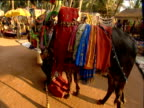 Costumed cow balances on knees of prone man playing horn Goa