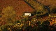 Cottage in the vinyards, nr Alba, Langhe, nr Piedmont, Italy, Europe