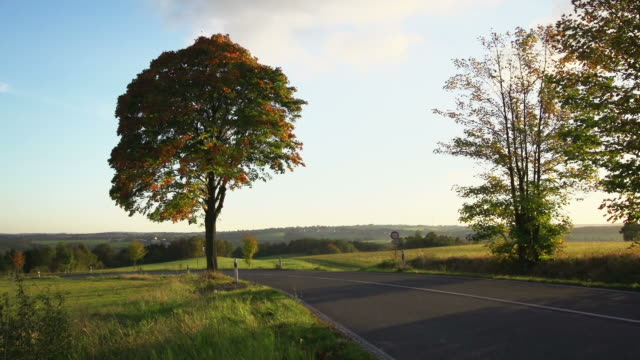 CRANE UP: Country Road Autumn