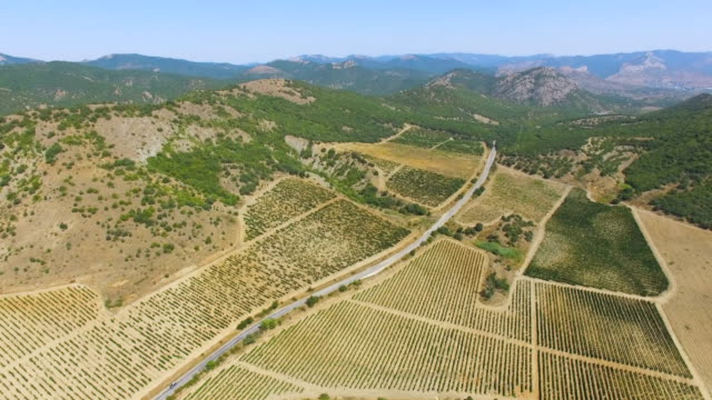 AERIAL: Country road between vineyards in mountains