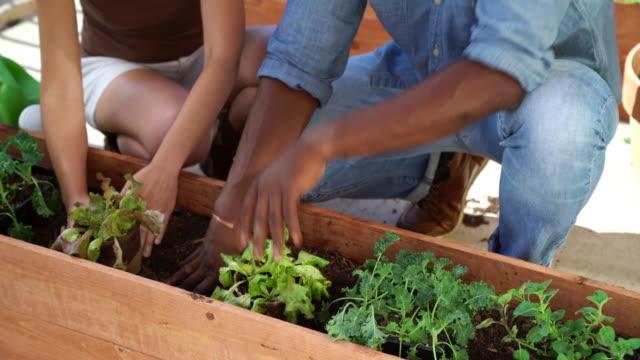 Couple adding a biodegradable plant pot into a planter box