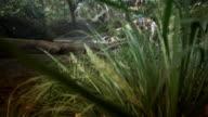 CU, CS, WS, Couple crossing stream in tropical rainforest, Mossman, Queensland, Australia