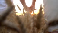 HD SUPER SLOW-MOTION: Couple Holding Hands In Wheat Field