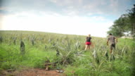 Couple holiday Thailand walking through Pineapple field