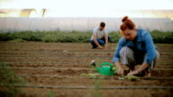 Couple in the field planting vegetables