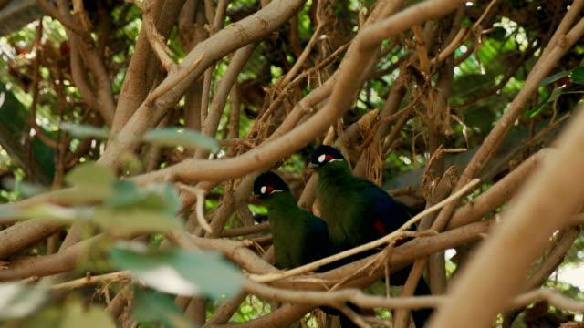 Couple of exotic birds