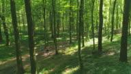 AERIAL paar läuft durch den Wald