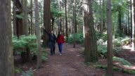 Couple travel and hikes in Giant Redwood forests New Zealand