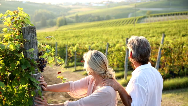Couple walk into vineyard, look at view