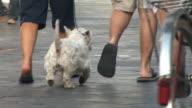 HD: Paar mit Hund