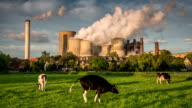 Kuh gegen Power Plant