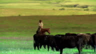 Cowboy and Cowgirl  herding cattle on the prairies