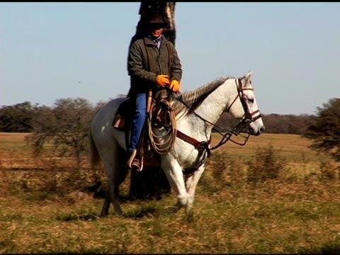Cowboy Herding Black Steer Cattle on White Horse
