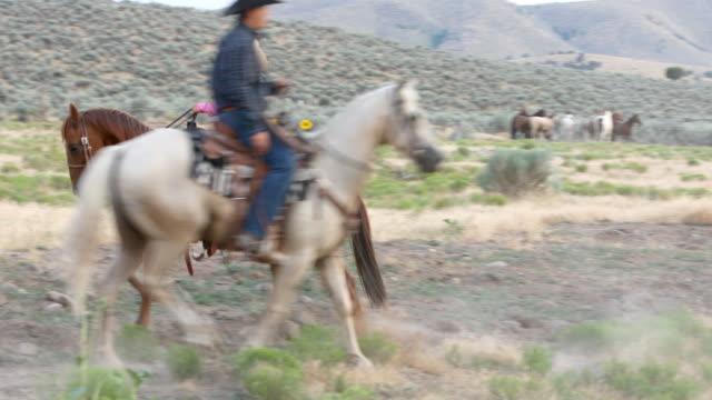 Cowboy-Arbeit zu eine Gruppe von Wildpferden hüten