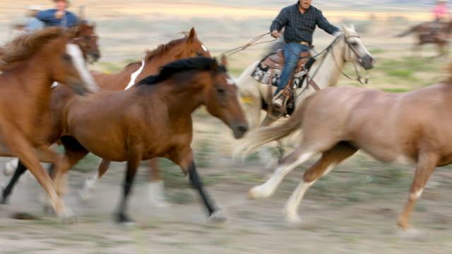 Cowboy werken aan de kudde een groep wilde paarden
