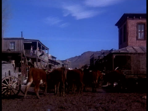 Cowboys and ranchers drive cattle though the muddy streets of an old West town.